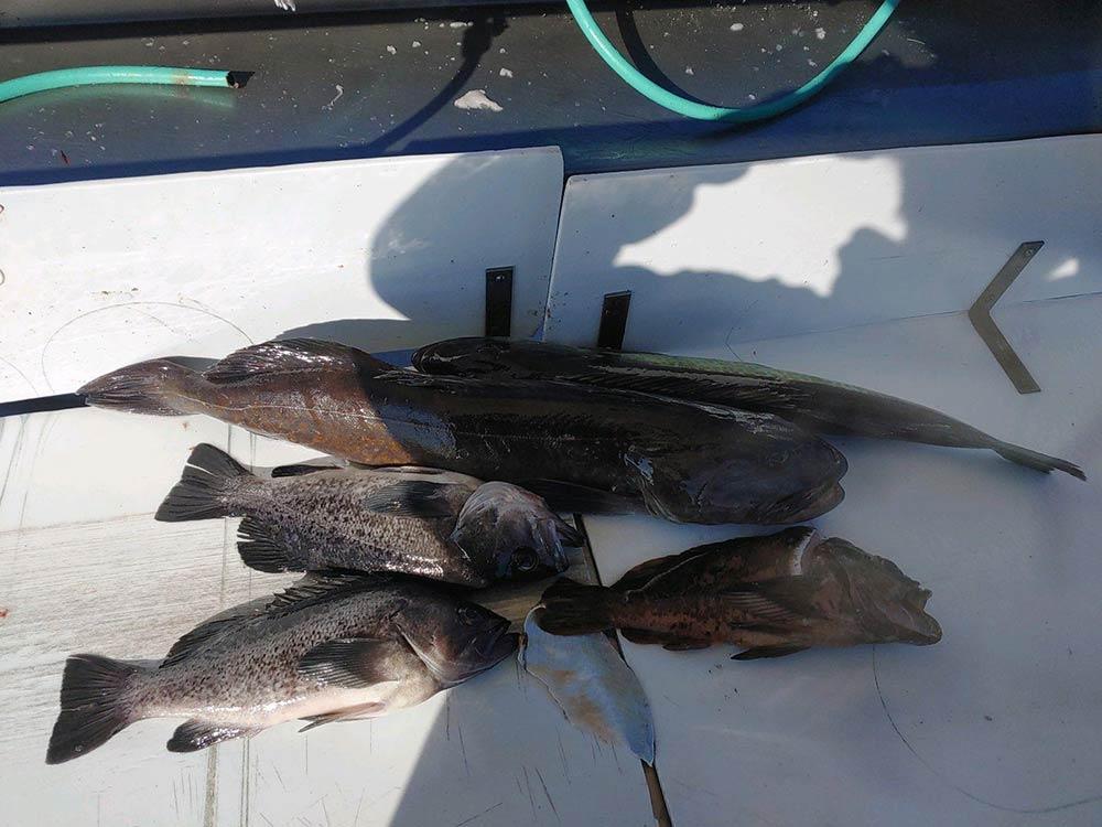 Ocean Rockfish: April 8, 2021